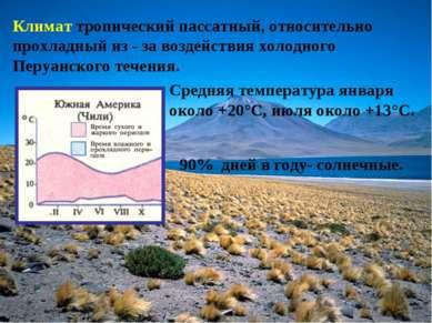 Климат тропический пассатный, относительно прохладный из - за воздействия хол...
