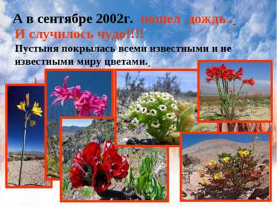 А в сентябре 2002г. пошел дождь . И случилось чудо!!!! Пустыня покрылась всем...