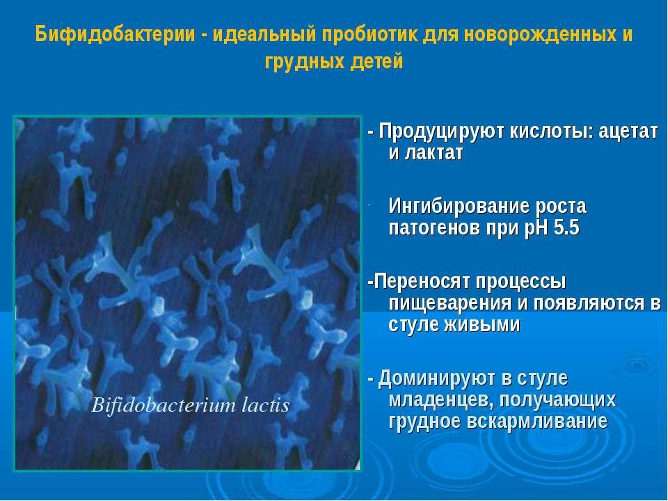 - Продуцируют кислоты: ацетат и лактат Ингибирование роста патогенов при pH 5...