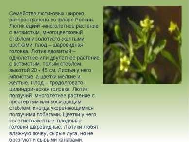 Семейство лютиковых широко распространено во флоре России. Лютик едкий -много...
