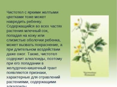 Чистотел с яркими желтыми цветками тоже может навредить ребенку. Содержащийся...