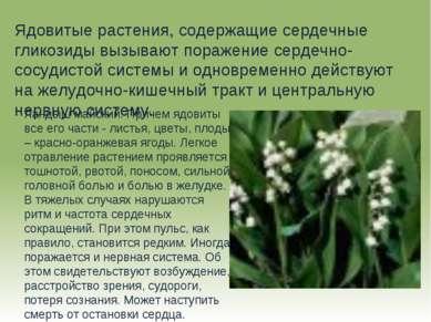 Ядовитые растения, содержащие сердечные гликозиды вызывают поражение сердечно...