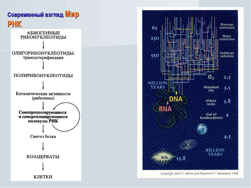 Современный взгляд Мир РНК