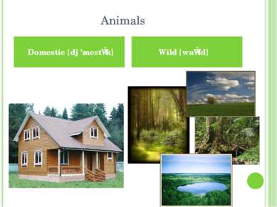 Animals Домашні Дикі Domestic [də'mestɪk] Wild [waɪld]