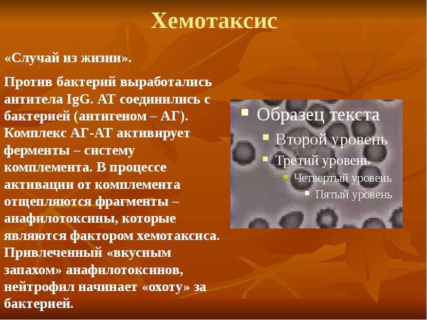 Хемотаксис «Случай из жизни». Против бактерий выработались антитела IgG. АТ с...