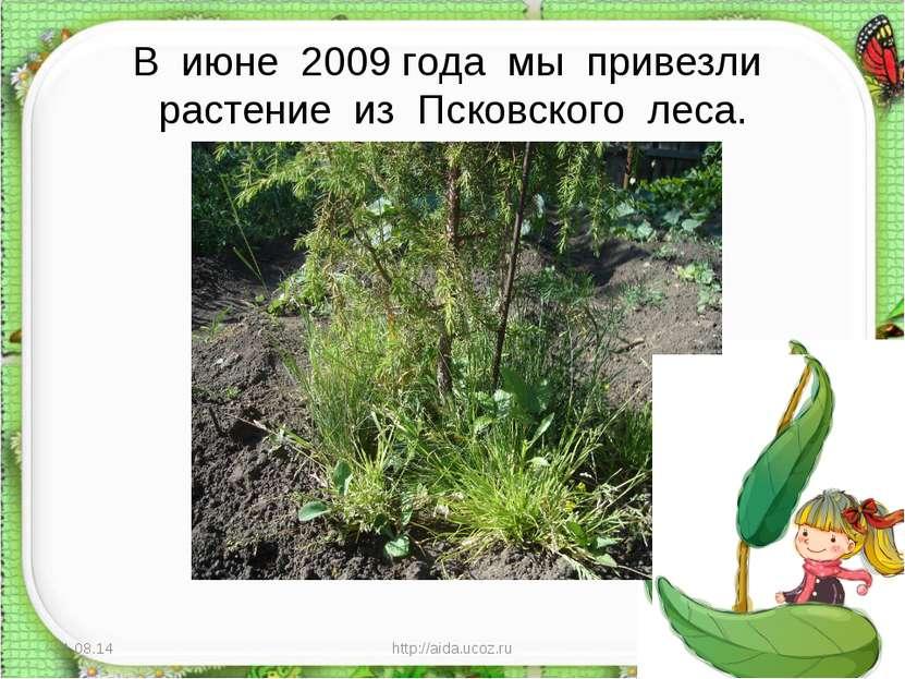 В июне 2009 года мы привезли растение из Псковского леса. * http://aida.ucoz....