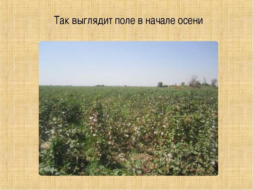 Так выглядит поле в начале осени