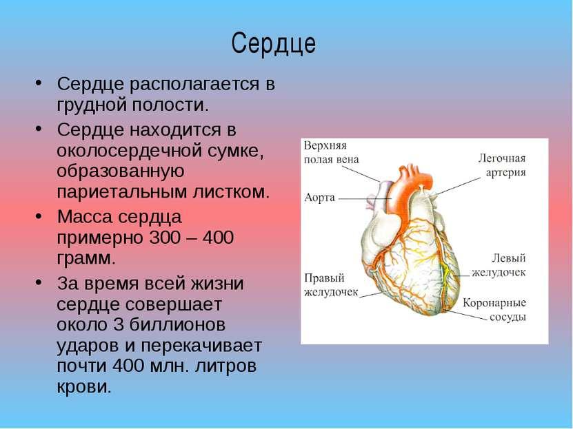 Сердце располагается в грудной полости. Сердце находится в околосердечной сум...