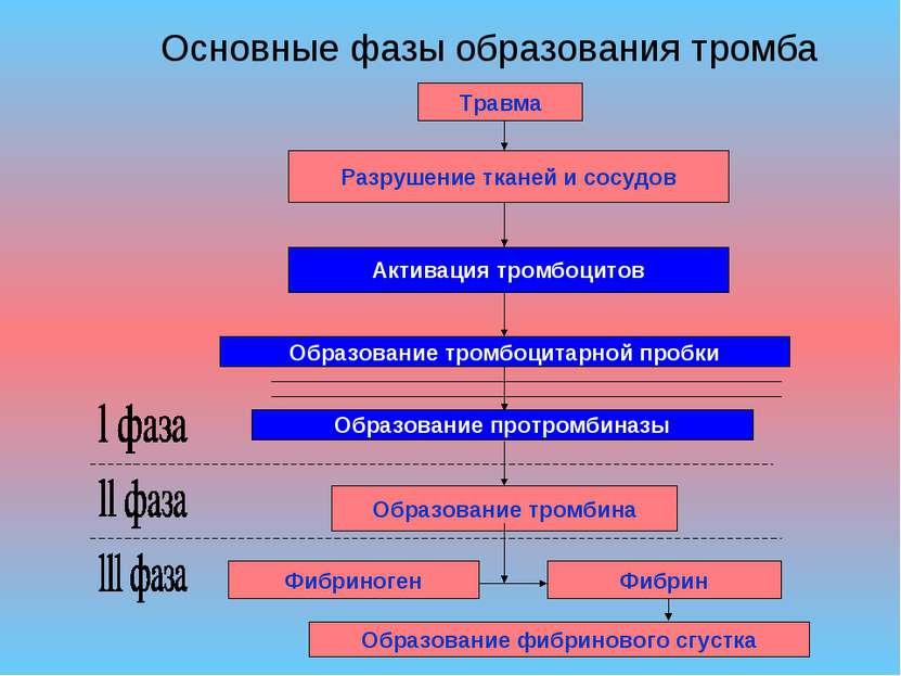 Основные фазы образования тромба
