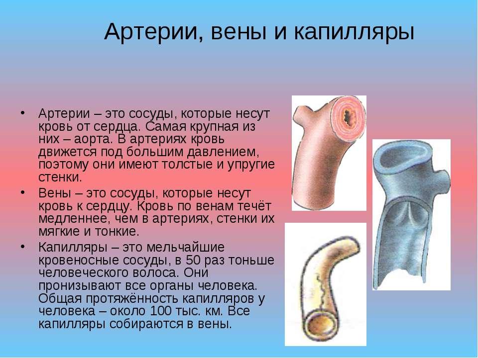 Артерии, вены и капилляры Артерии – это сосуды, которые несут кровь от сердца...