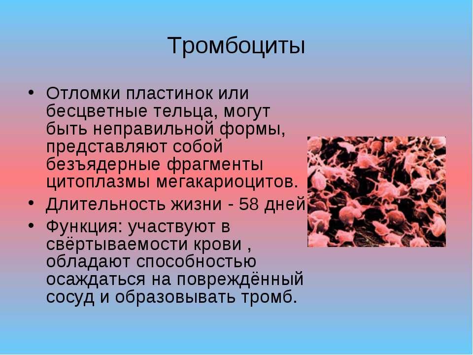 Тромбоциты Отломки пластинок или бесцветные тельца, могут быть неправильной ф...