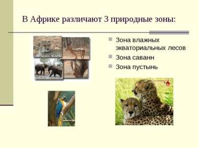 В Африке различают 3 природные зоны: Зона влажных экваториальных лесов Зона с...