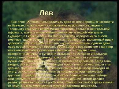 Лев Еще в VIII—X веках львы водились даже на юге Европы, в частности на Кавка...