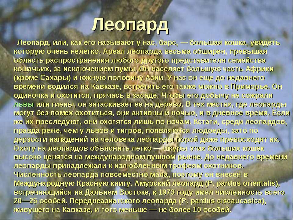 Леопард Леопард, или, как его называют у нас, барс, — большая кошка, увидеть ...
