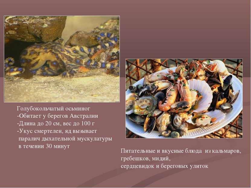 Голубокольчатый осьминог -Обитает у берегов Австралии -Длина до 20 см, вес до...