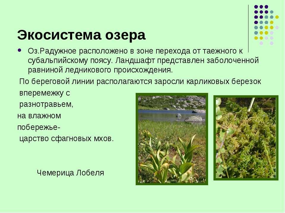 Экосистема озера Оз.Радужное расположено в зоне перехода от таежного к субаль...
