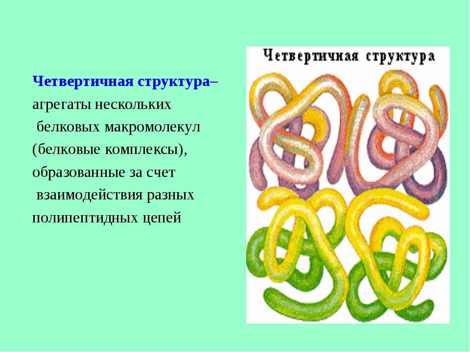 Четвертичная структура– агрегаты нескольких белковых макромолекул (белковые к...