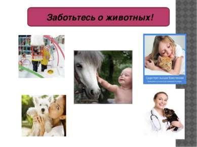 Заботьтесь о животных!