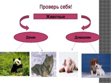 Проверь себя! Животные Дикие Домашние