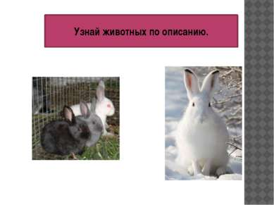 Узнай животных по описанию.