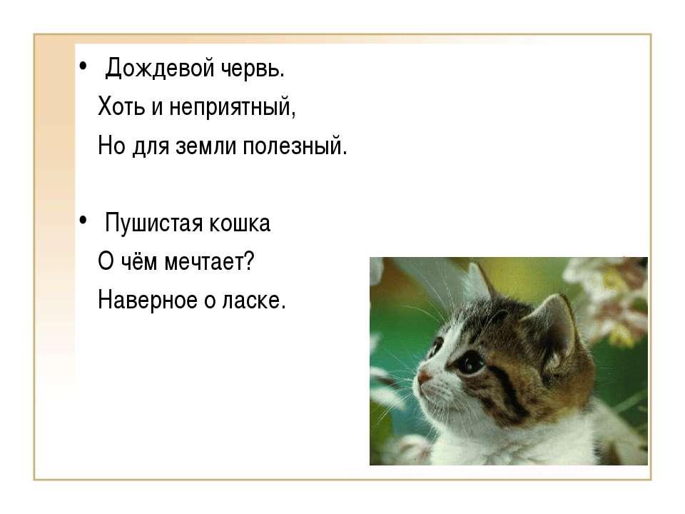 Дождевой червь. Хоть и неприятный, Но для земли полезный. Пушистая кошка О чё...