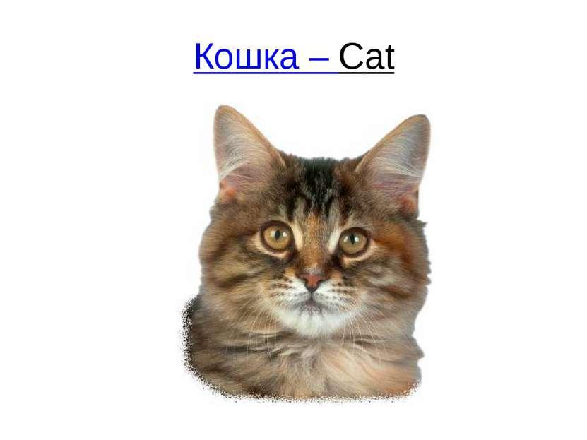 Кошка – Сat