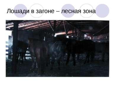 Лошади в загоне – лесная зона