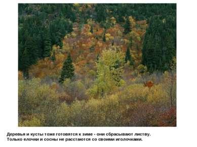 Деревья и кусты тоже готовятся к зиме - они сбрасывают листву. Только елочки ...
