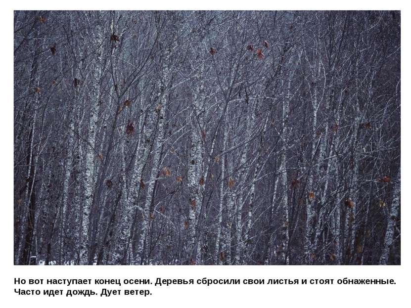 Но вот наступает конец осени. Деревья сбросили свои листья и стоят обнаженные...