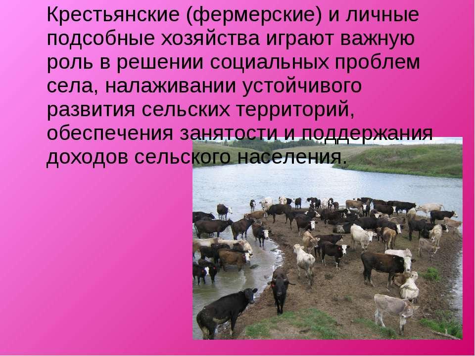 Крестьянские (фермерские) и личные подсобные хозяйства играют важную роль в р...