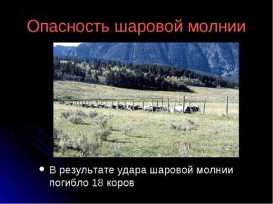 Опасность шаровой молнии В результате удара шаровой молнии погибло 18 коров