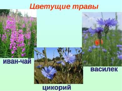 Цветущие травы
