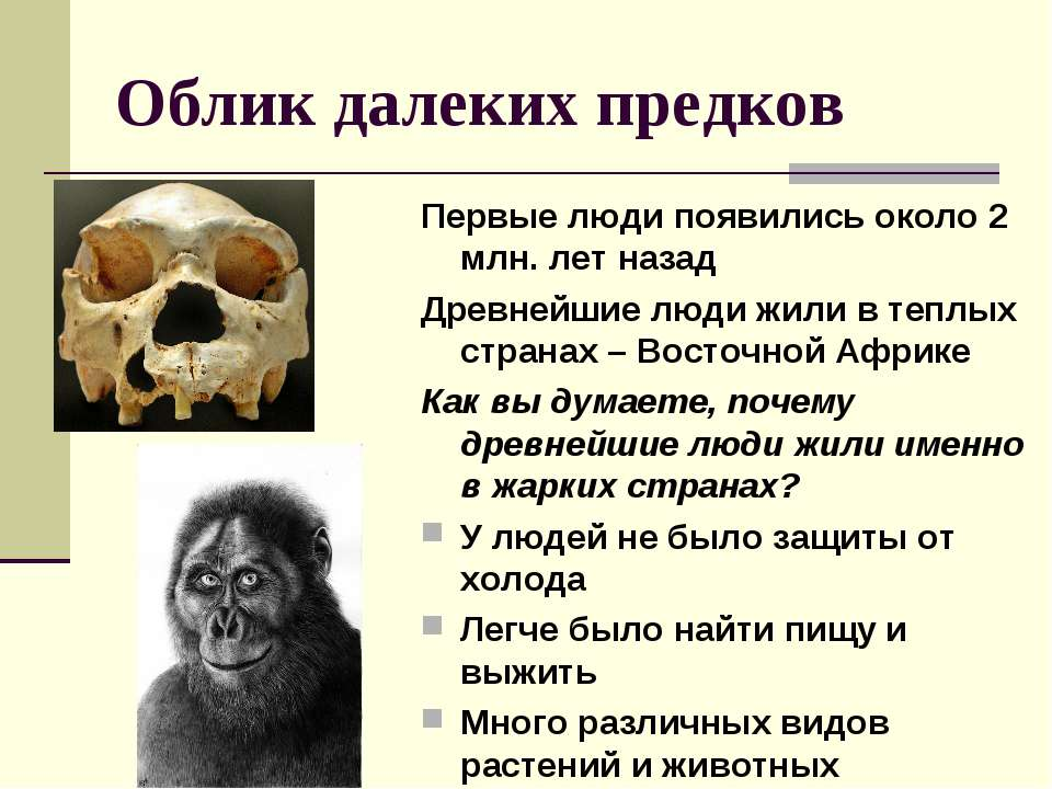 Облик далеких предков Первые люди появились около 2 млн. лет назад Древнейшие...