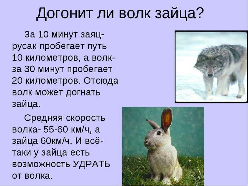 Догонит ли волк зайца? За 10 минут заяц-русак пробегает путь 10 километров, а...