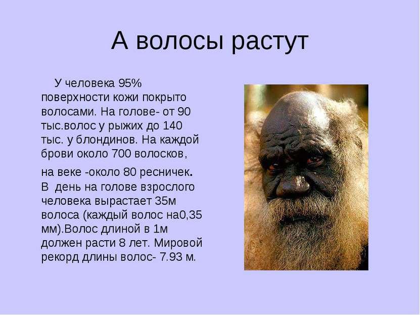А волосы растут У человека 95% поверхности кожи покрыто волосами. На голове- ...