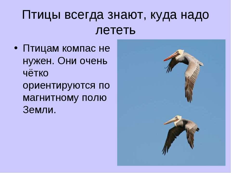 Птицы всегда знают, куда надо лететь Птицам компас не нужен. Они очень чётко ...