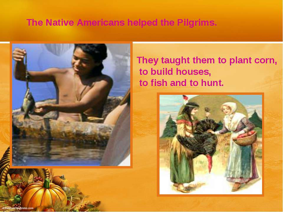 The Native Americans helped the Pilgrims. They taught them to plant corn, to ...
