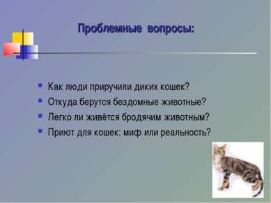 Проблемные вопросы: Как люди приручили диких кошек? Откуда берутся бездомные ...