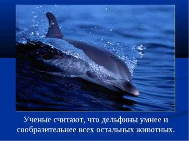 Ученые считают, что дельфины умнее и сообразительнее всех остальных животных.