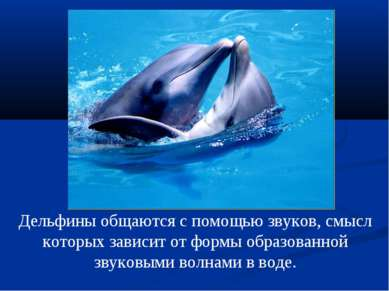 Дельфины общаются с помощью звуков, смысл которых зависит от формы образованн...