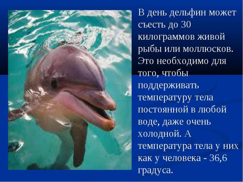 В день дельфин может съесть до 30 килограммов живой рыбы или моллюсков. Это н...