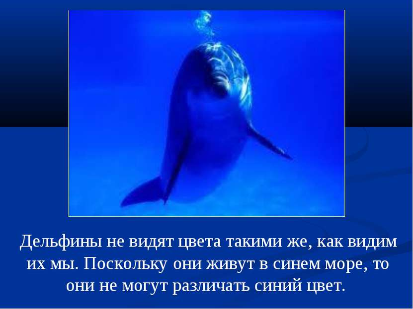 Дельфины не видят цвета такими же, как видим их мы. Поскольку они живут в син...