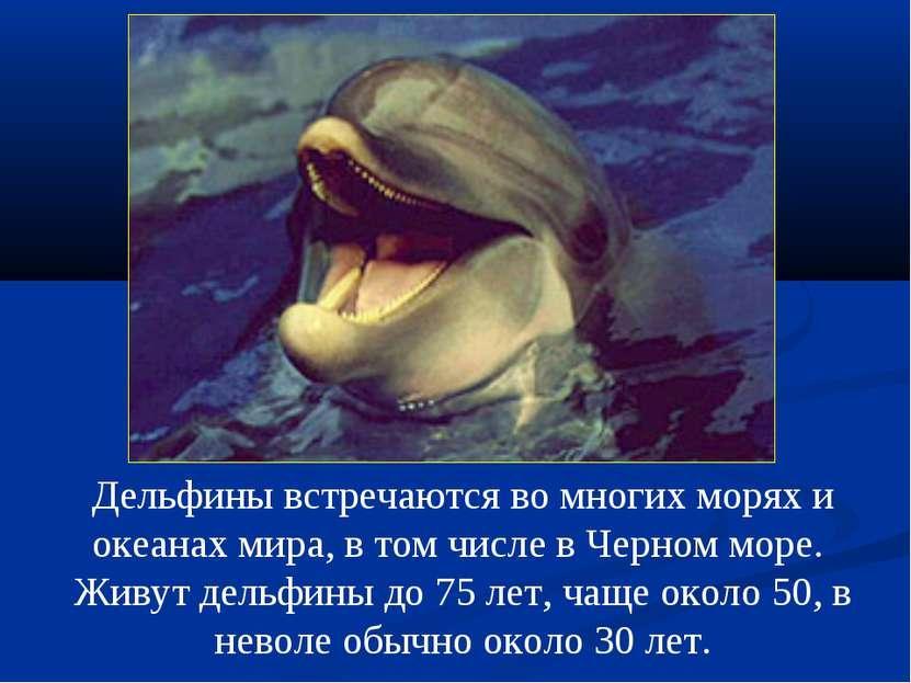 Дельфины встречаются во многих морях и океанах мира, в том числе в Черном мор...