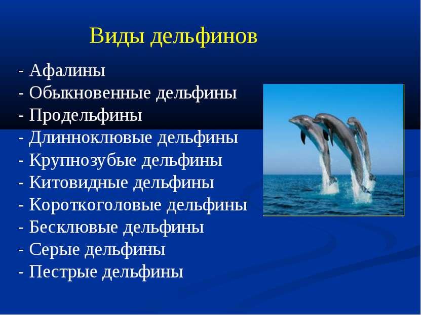 Виды дельфинов - Афалины - Обыкновенные дельфины - Продельфины - Длинноклювые...