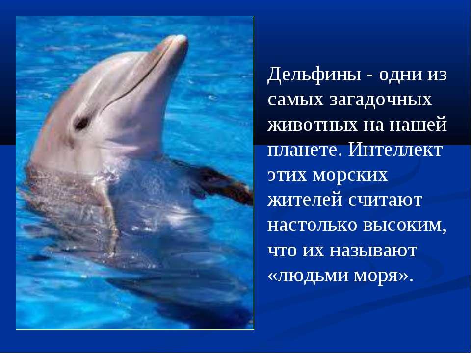 Дельфины - одни из самыхзагадочных животных на нашей планете. Интеллект этих...