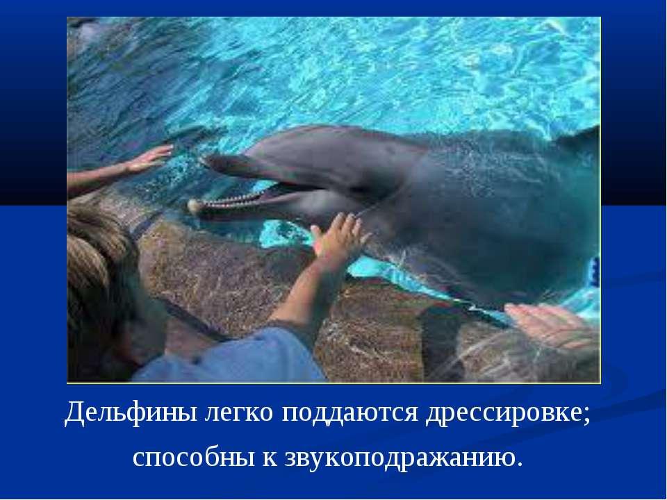 Дельфины легко поддаются дрессировке; способны к звукоподражанию.