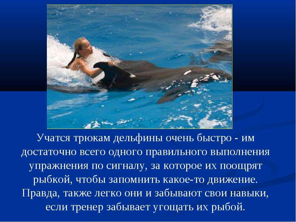 Учатся трюкам дельфины очень быстро - им достаточно всего одного правильного ...