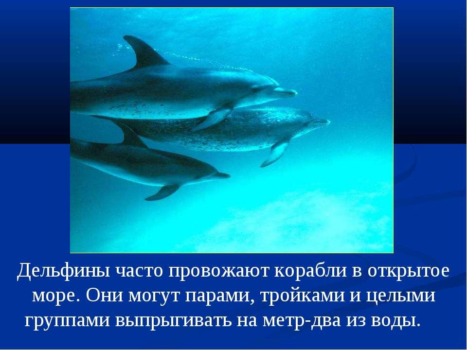 Дельфины часто провожают корабли в открытое море. Они могут парами, тройками ...