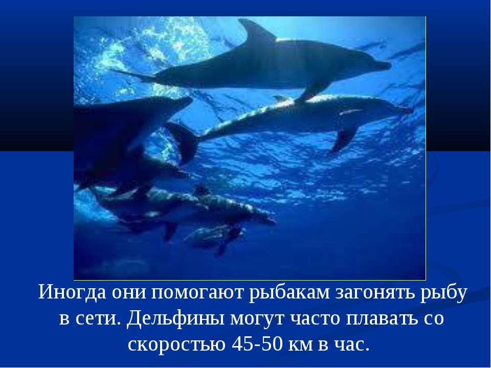 Иногда они помогают рыбакам загонять рыбу в сети. Дельфины могут часто плава...