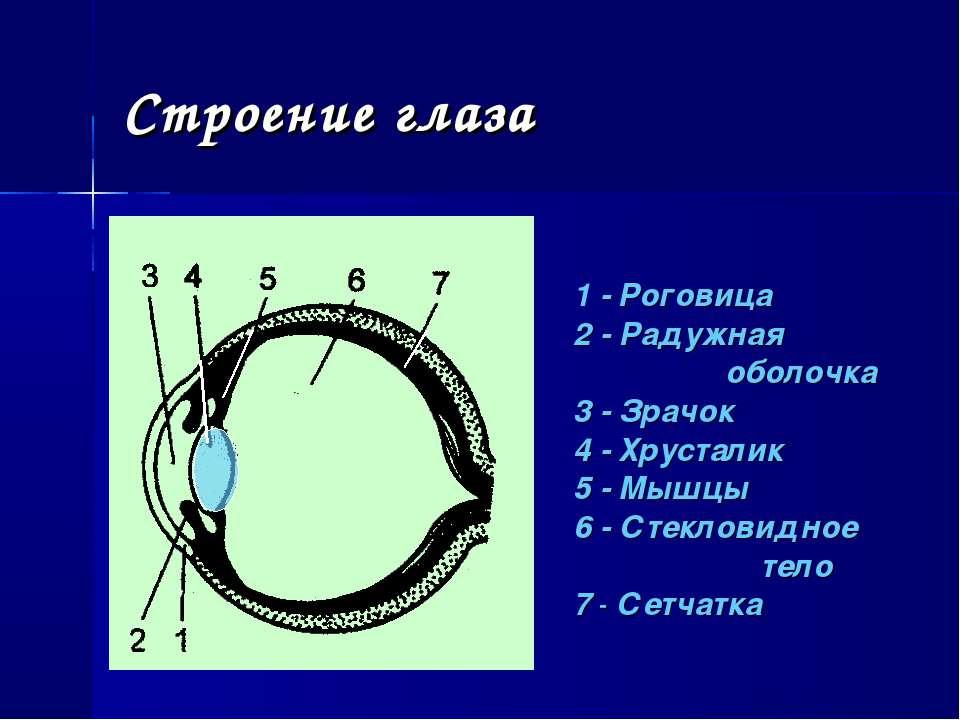 Строение глаза 1 - Роговица 2 - Радужная оболочка 3 - Зрачок 4 - Хрусталик 5 ...